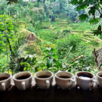 bali coffee plantation